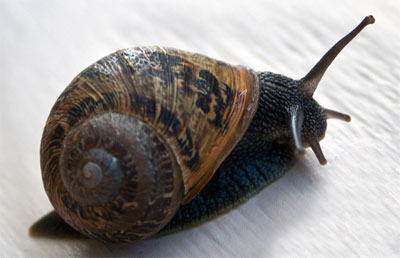 real snail photo