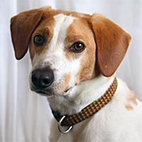 Kippy-office-dog-200px